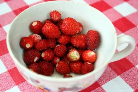 schweden-erdbeeren-1